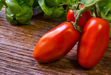 What makes San Marzano Tomatoes so Special?